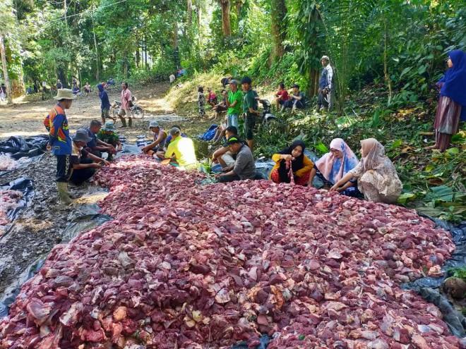 Warga Desa Rantau Gedang Kecamatan Bahtin VIII Potong 37 Ekor Hewan Kurban