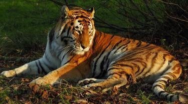Foto ilustrasi, sumber Liputan6.com